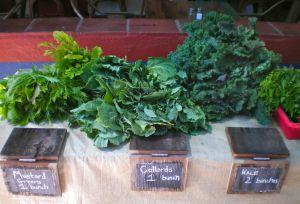 Mustard Greens, Collards, & Kale