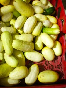 Boothby's Blonde & Mini White Cucumbers