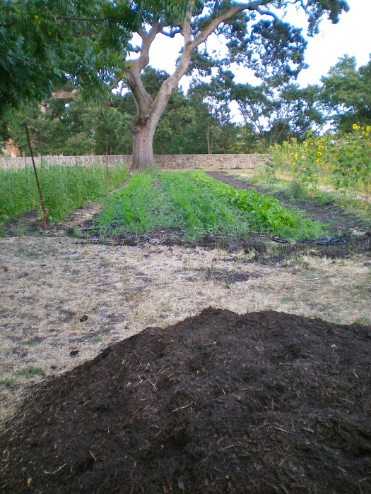 Compost waiting to be added to the field