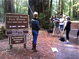 Filming in the redwoods
