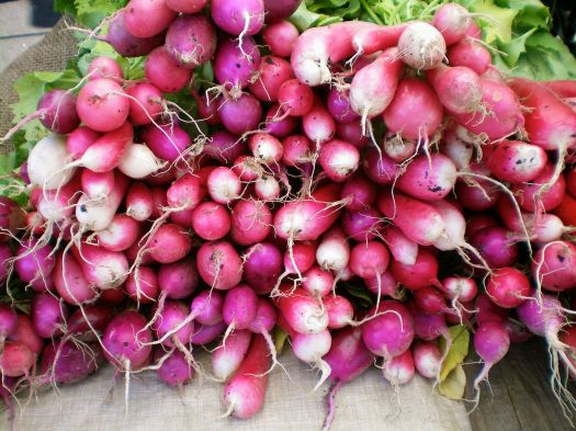 Radishes from early June