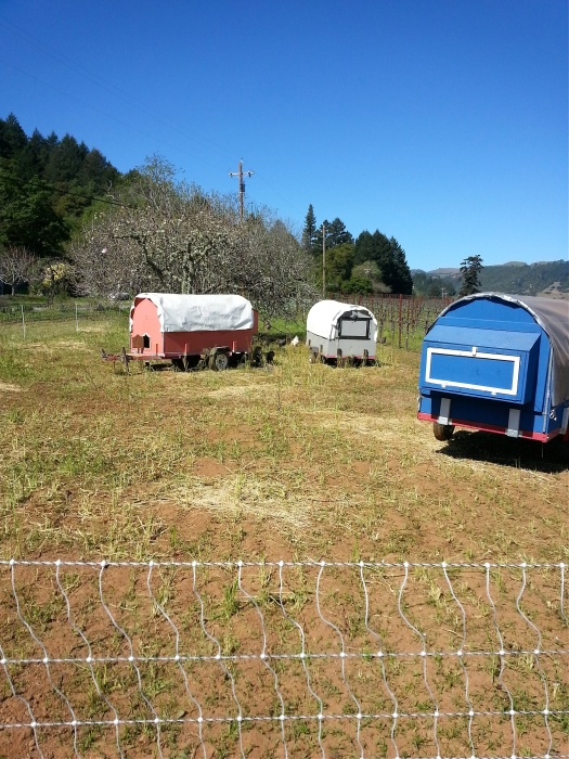 Preston Farm & Winery's chicken tractors