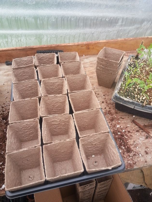 Peat pots ready for plants