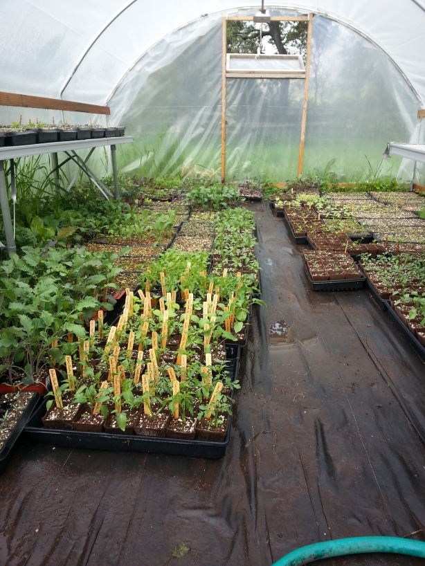 The greenhouse in question