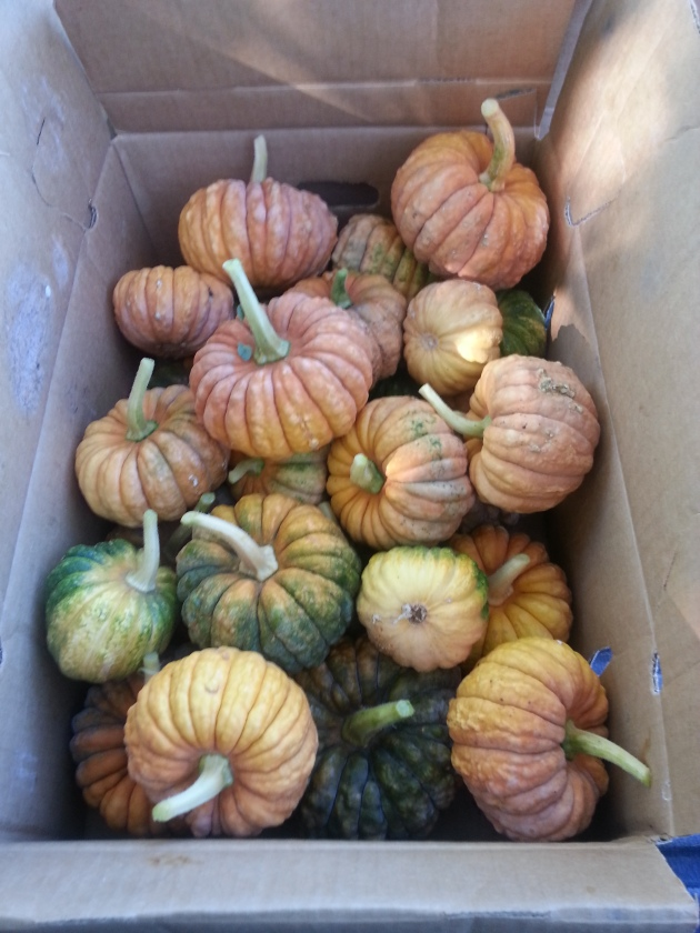 Black Futsu pumpkins