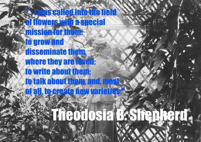 theodosia quote
