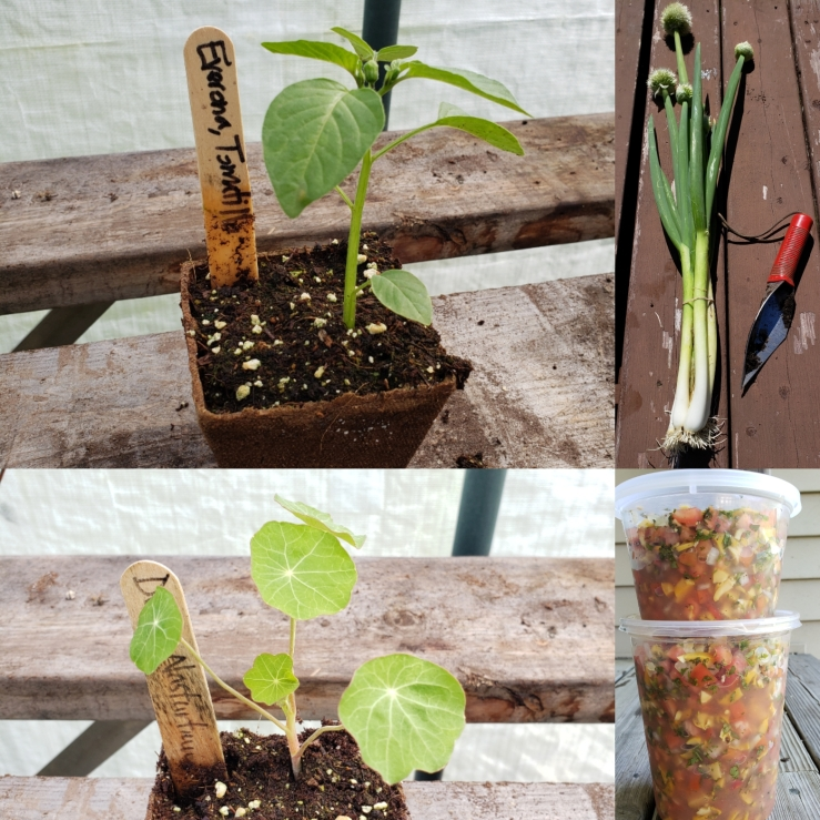 seedlings, green onions