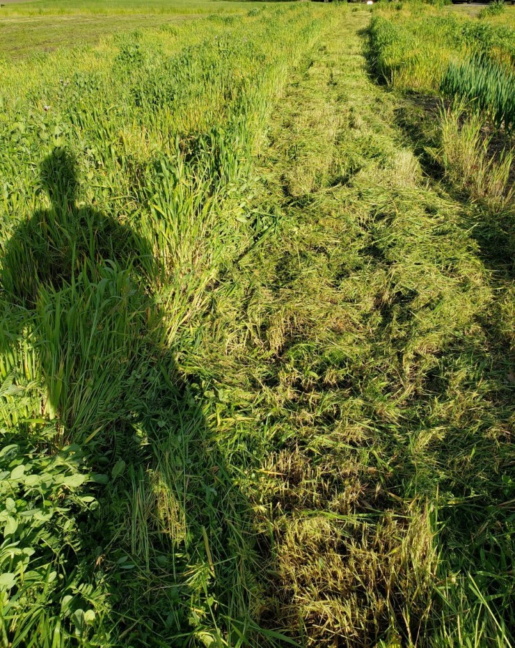 mowing cover crop