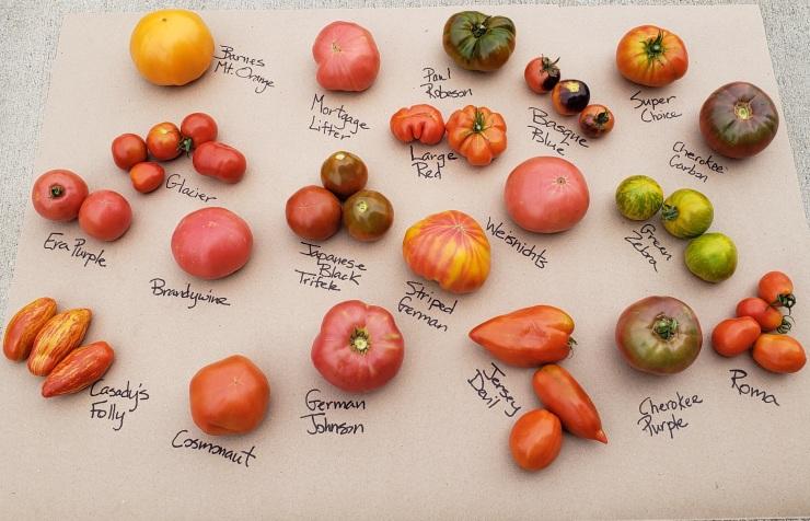 20 tomato varieties