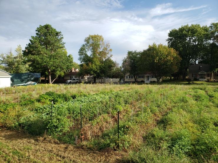 field in September